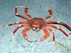 crabpinch.jpg