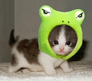 cutest_little_kitten_and_frog_Kopie.jpg