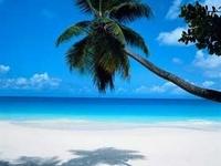 hawaii-beach[1](2).jpg