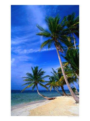 Palm-Trees-on-Island-Beach-Panama-Photographic-Print-C12081252.jpg