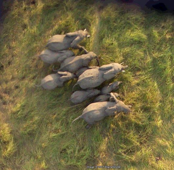 134186-05_Elephants.jpg