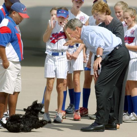 Bush-dog-thumb.jpg