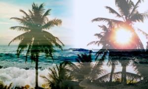 zhu paradise awaits LCAW