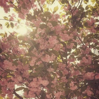 chrome tumblr photo